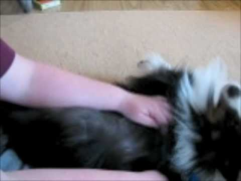 How To Line Brush with a FURminator