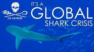 Global shark crisis! - POWERFUL VIDEO