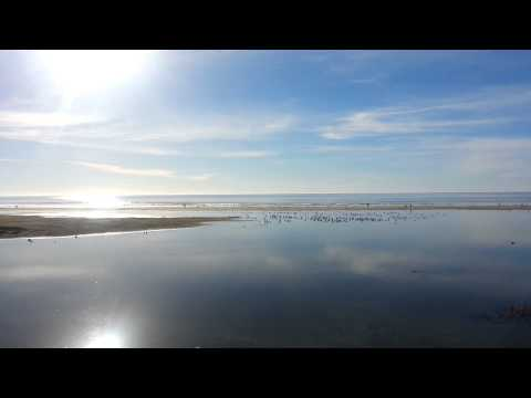 Sights and Sounds of the Pacific Ocean - Pismo Beach State Park