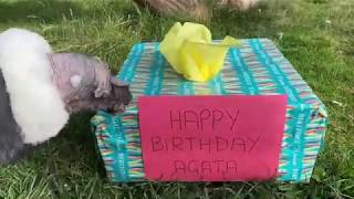 Happy Birthday Agata, from Andy!
