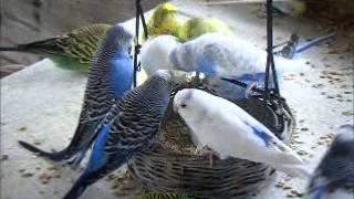 2012 05 16 In 10 Minuten ist ein Ei aufgefressen..wmv