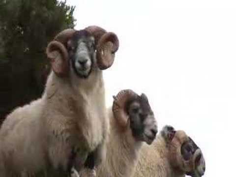 Mist Sheepdog Tales Series 2 Trailer