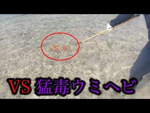 【食料調達】猛毒ウミヘビは食べられるらしい!!#4