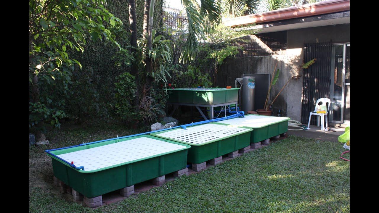 How the indoor aquaponics fish tank system works made for Aquaponics aquarium