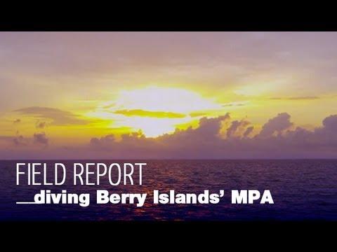 Diving Berry Islands