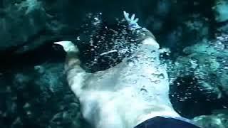 alligator attack at crystal river fl graphic