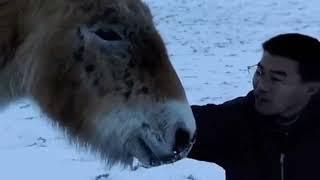 Wild Horses Return to China - Nature Wildlife