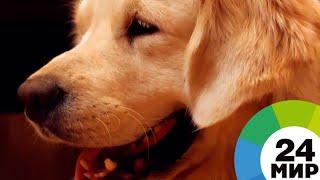 И друзья, и доктора: В Минске собаки-терапевты лечат детей - МИР 24
