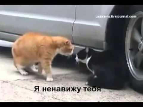 Коты ругаются смотреть
