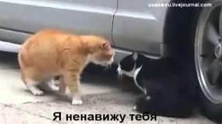 Прикольные кошки   Два кота орут на друга  Забавно смотреть!!