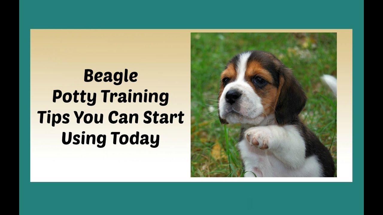 Keep It Cute Dog Training