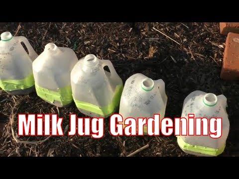 erv's-complete-milk-jug-gardening-guide