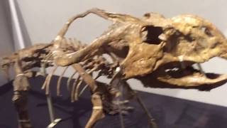 熊本県の御船町にある、恐竜博物館に行って来ました! ゴビ砂漠の恐竜展が開催されていました。 リニューアル後、なかなか良かったですよ。 カメラ撮影はOKでした!