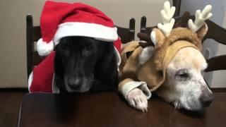 今年も2匹で一緒に少し早目のクリスマス!今年はゆるキャラケーキを作...