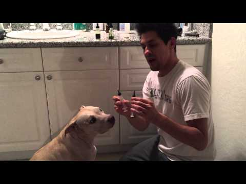 Pit Bull Beats Cancer Cannabis Oil 8-15