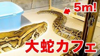 【大蛇カフェ】5mの大蛇がいるカフェがスゴすぎた!