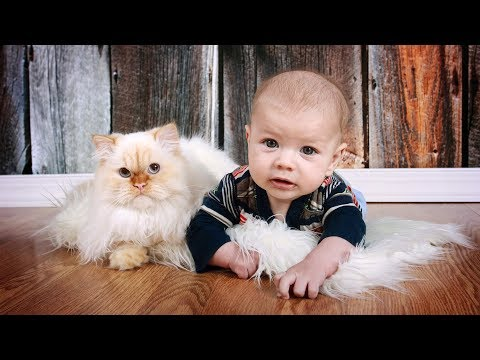 Cute Cats and Dogs Love Babies Compilation Video (2017)
