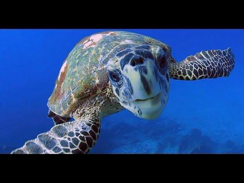 Underwater Landscape of the Seychelles - Franck Fougère