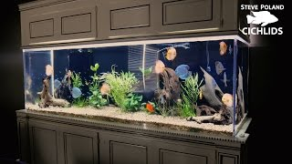 Two 500 Gallon Tanks in One Living Room!