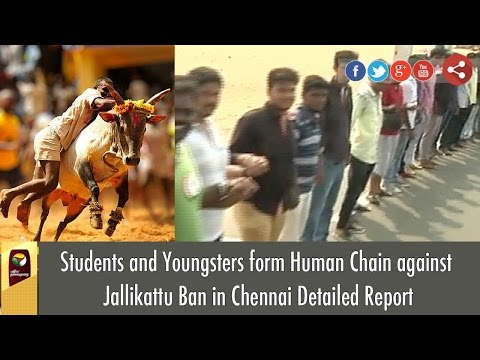 Students and Youngsters form Human Chain against  Jallikattu Ban in Chennai Detailed Report