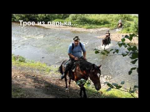 Лошади фото. Все породы лошадей фотографии