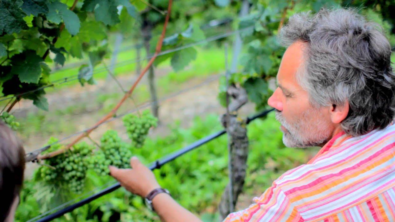 Die Weinexperten So Funktioniert Der Rebschnitt Youtube