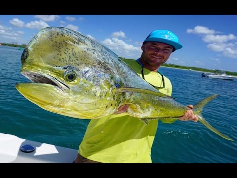 Catching And Filleting A Mahi Mahi: How To
