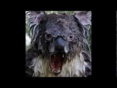 Justin Bieber ft. Angry Koala - YouTube