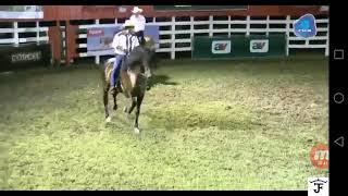 EXHIBICION DE LA ALFOMBRA ROJA DE LLOS CABALLOS DE COSTA RICA