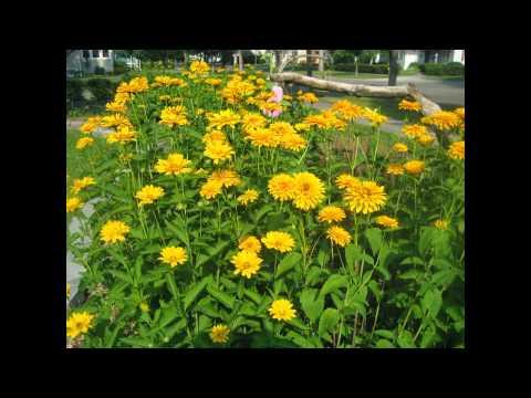 Жёлтые многолетние цветы фотоподборка лучших видов