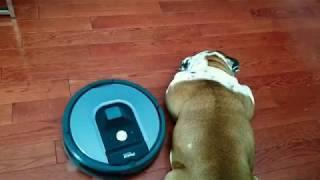 Warning! Roomba attacks sleeping dog the sequel