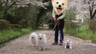 憧れのお姉さんスピッツと3スピお花見さんぽへ行ってきました!