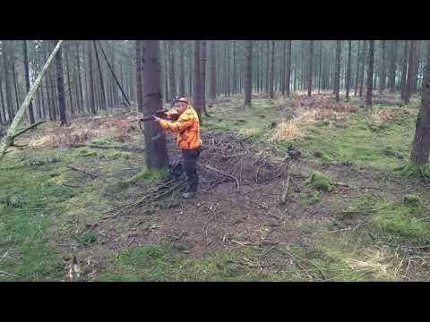 chasse, battue aux sangliers dans les Vosges acte 3.......