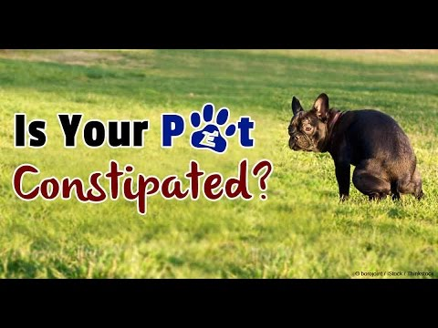 Treatment For Constipation Reme Of Dog By Aman Prabhakar