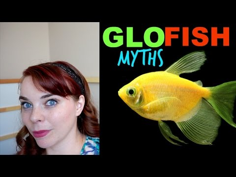THE TRUTH ABOUT GLOFISH | Glofish Explained