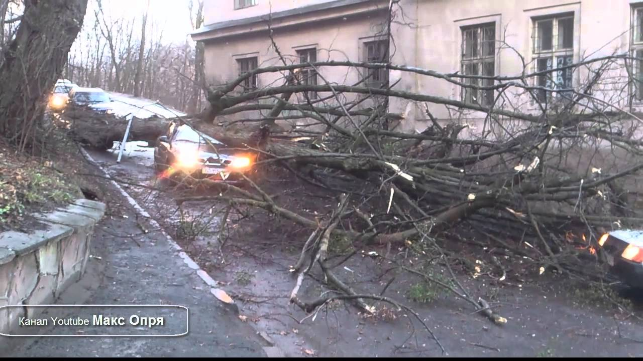 Funny Video: Tree Falls On Driver In Russia