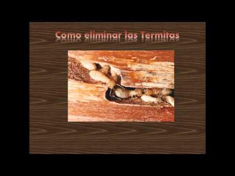 Las termitas enemigas feroces de la madera doovi - Acabar con las termitas ...