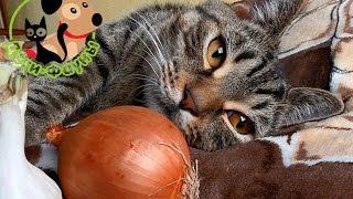 Можно собакам лук? Чеснок опасен для кошек?