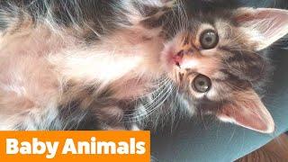 Cute Baby Animal Bloopers   Funny Pet Videos