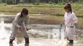 里田まいと佐渡トキの田んぼを守る会が、生き物を育む農法を実施し土地...