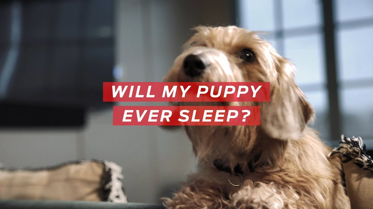 How to get a puppy to sleep | All About Pets, from Purina
