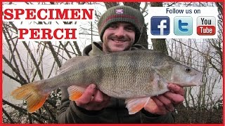 Specimen Perch Fishing On Commercial Fisheries With Andy Loble