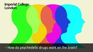 How do psychedelic drugs work on the brain?