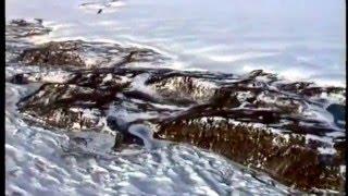 Schirmacher Oasis, Queen Maud Land, Antarctica 1992