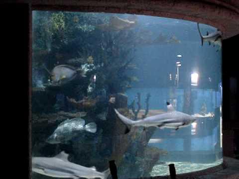 Monster 5000 gallon shark tank fish aquarium episode 1 for 10000 gallon fish tank
