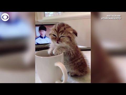 WEB EXTRA: Sleepy Kitten With Coffee