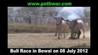 bull race bewal gujar khan 08 july 2012