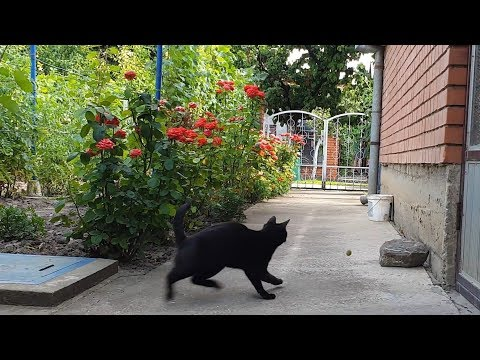 Cat Who Loves To Chase Peaches