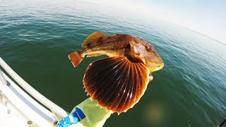 HOW TO: FILLET A SEA ROBIN