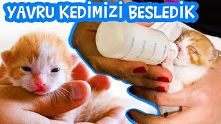 how to feed baby kitten, kitten sound, kitten walk